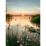 Sunset Lake - Paint By Numbers Kit For Adults - Easy Paint By Number Kits for adults- DIY Miss