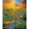 Sunset Field - Paint By Numbers Kit For Adults - Easy Paint By Number Kits for adults- DIY Land