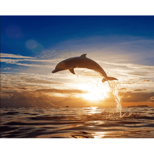 Dolphin n Sunset - Paint By Numbers Kit For Adults - Easy Paint By Numbers - DIY Ocean