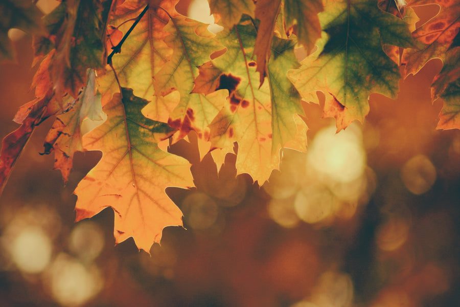 Cultivating Health in Autumn