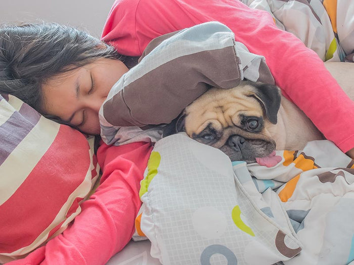 Asian women and dog sleeping in bed