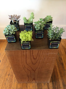 Lucky Number 7 Succulent bundle!