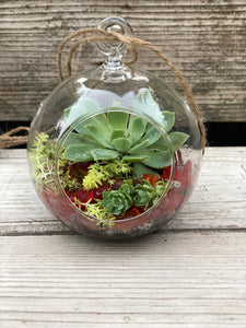 Small Succulent Globe Beach Glass