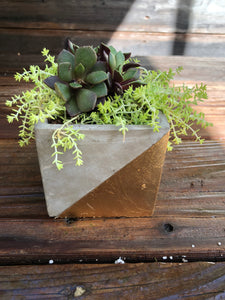 Square Gold Leaf Pot with Succulent