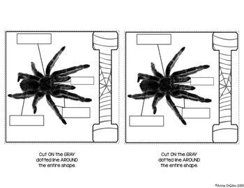 Spiders Flip Flap Book® | Distance Learning