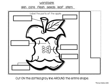 Apples Flip Flap Book®