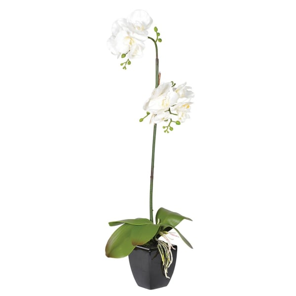 Tall White Orchid Phalaenopsis in Black Ceramic Pot