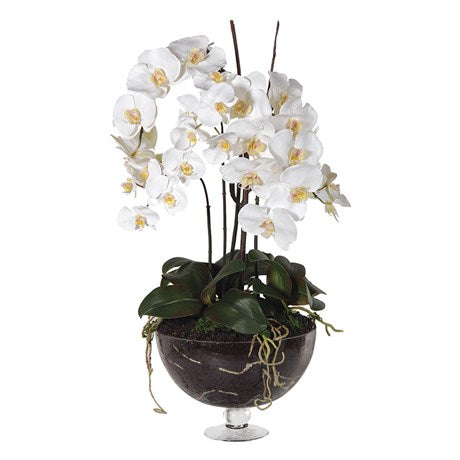 White Orchid Phalaenopsis Plants in Glass Footed Bowl