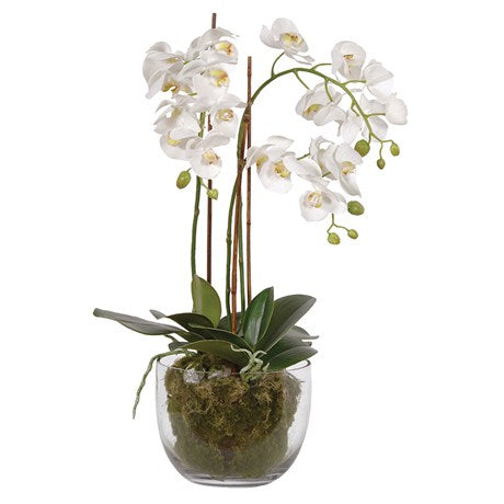 White Orchid Phalaenopsis Plants with Moss in Glass Bowl