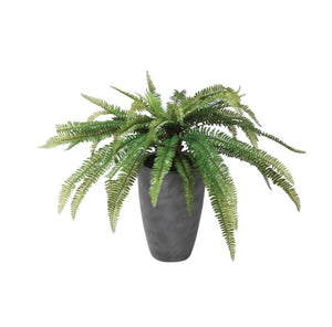 Tropical Fern Plant in Pot