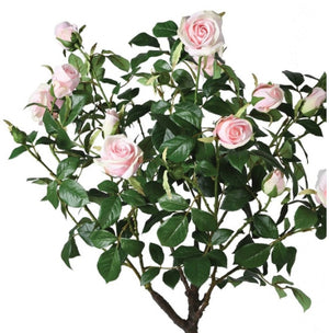 Pink Rose Tree in Pot