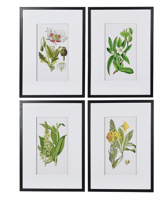 Set of 4 Garden Floral Pictures