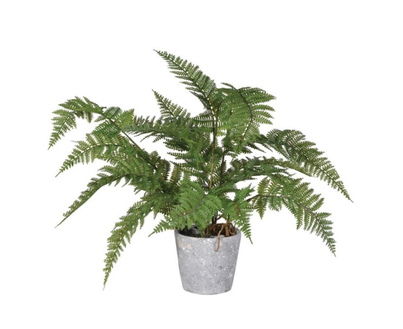 Green Bracken Fern Plant in Grey Cement Pot