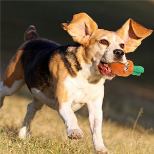 Squeaky Dog Toys for Small Dogs