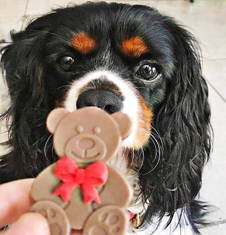Teddy Bear Dog Treat