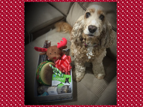 Mix Of Toys + Treats Christmas Doggy Box