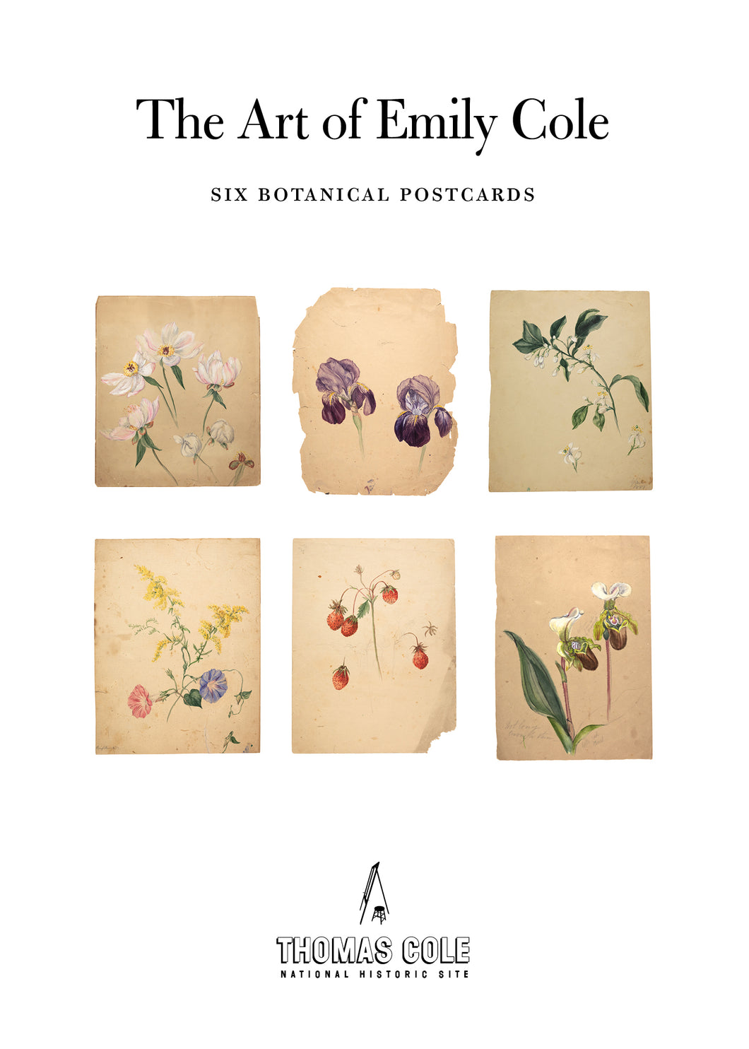 Art of Emily Cole Botanical Postcard Set