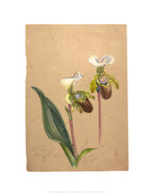 Load image into Gallery viewer, Emily Cole Ladyslipper Orchid Botanical Watercolor 11x14 Print