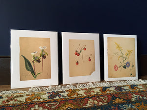 Emily Cole Goldenrod & Morning Glories Botanical Watercolor 11x14 Print