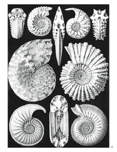 Load image into Gallery viewer, Ernst Haeckel Art Forms in Nature Coloring Book