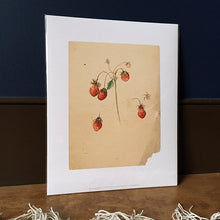Load image into Gallery viewer, Emily Cole Strawberries Botanical Watercolor 11x14 Print