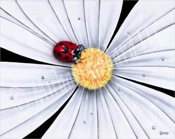 White Daisy Lady Bug