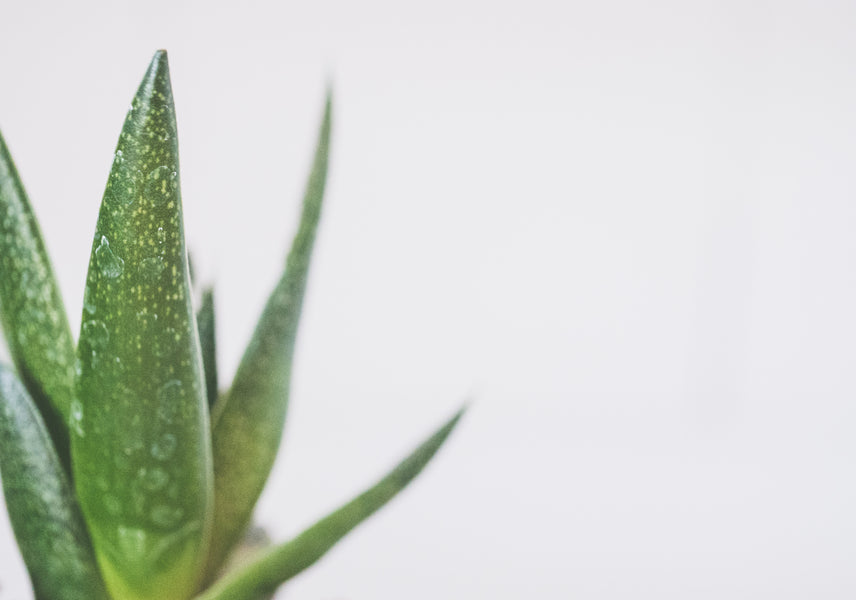 How to Make an At-Home Aloe Vera Hair Mask Treatment