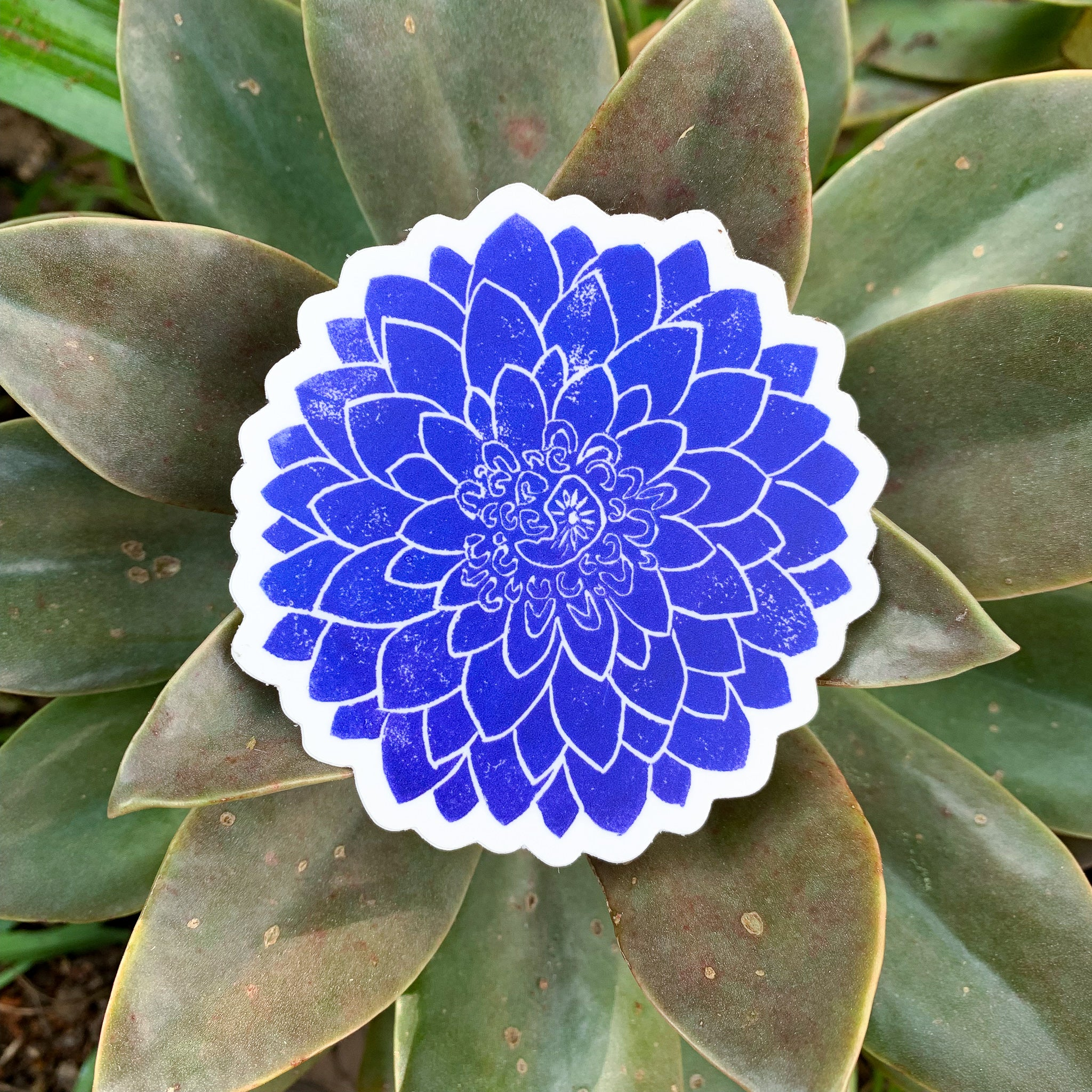 Dahlia Bloom Sticker