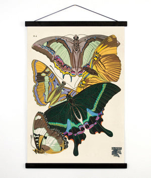 Vintage Natural History Butterfly Seguy 8 Canvas Print-18x24