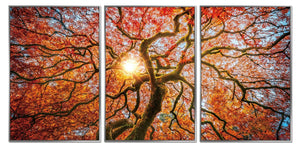 Framed Acrylic Pictures - Autumn Tree (Set of 3)