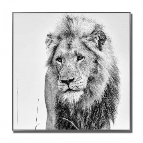 Lion Glass Art Black & White Picture