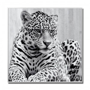 Cheetah Glass Art Black & White Picture