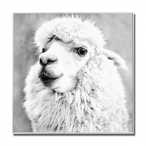 Alpaca Glass Art Picture Black & White
