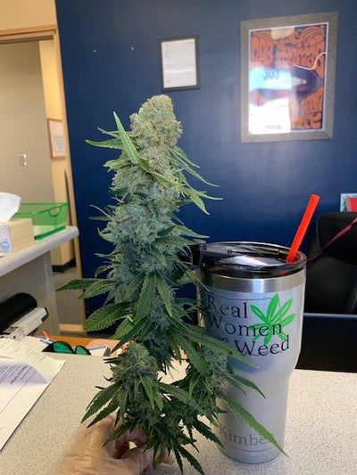 Chicken Soup For The Soil® (Cannabis) Dr Jimz