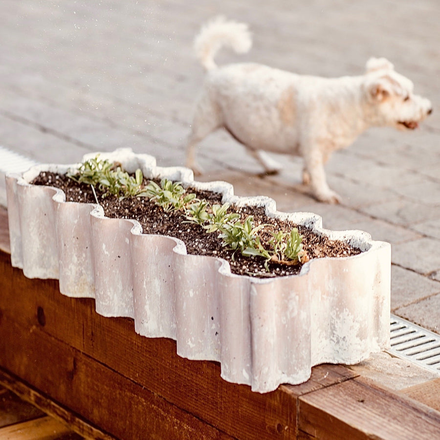 Cloud Planter I