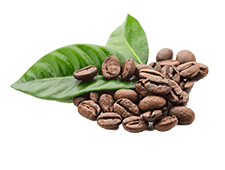 Coffee Leaf/ Seed Extract