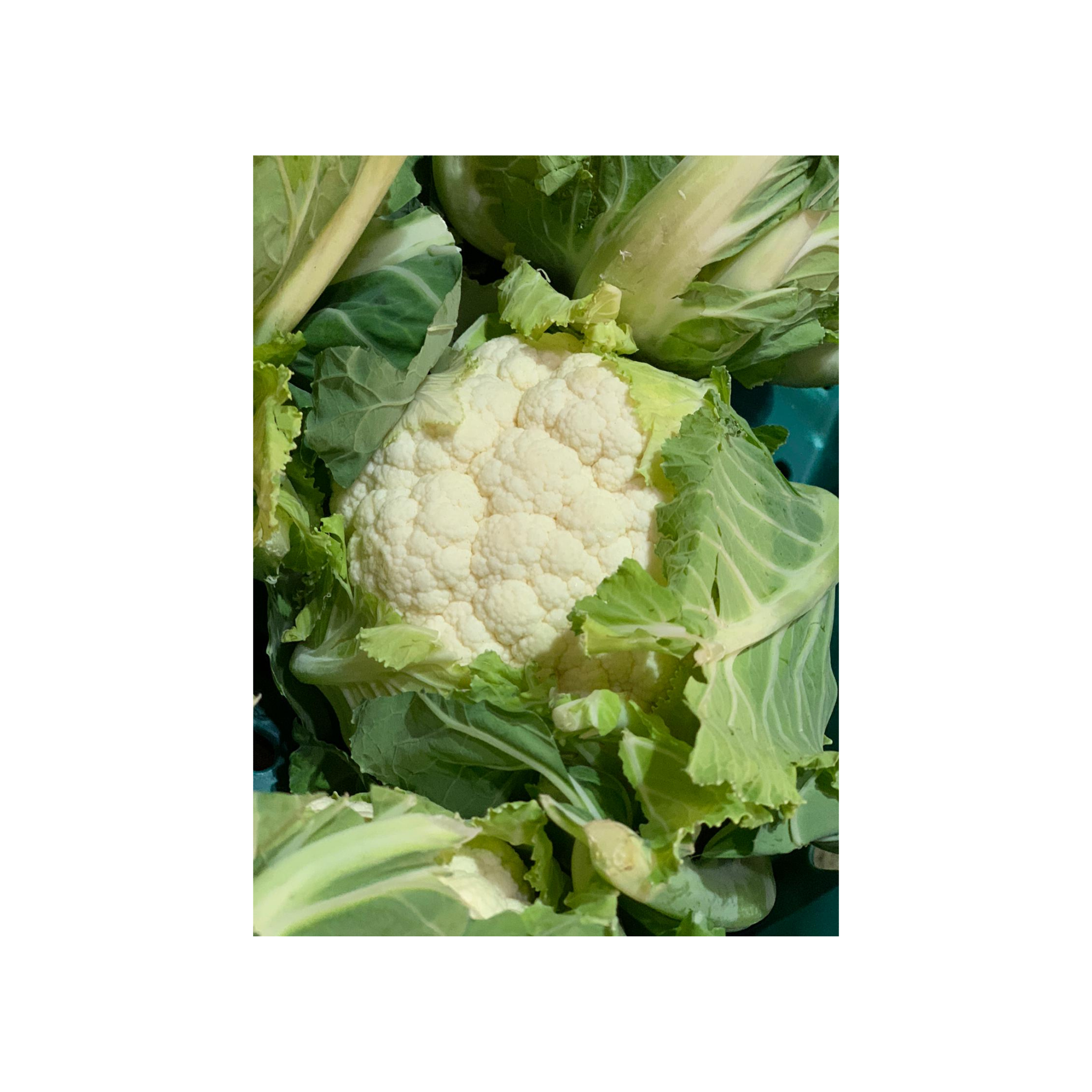 Picked For You Cauliflower