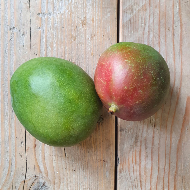 Organic Kent Mango (Single)