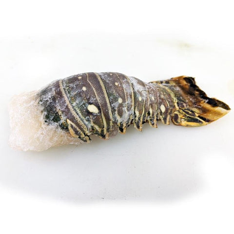 Lobster Tail 6 OZ ( 170g ) - Seafood Direct UK