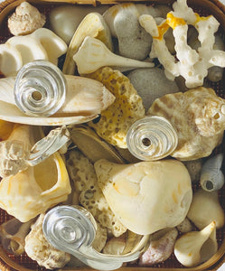 #shellmagnifique... Looking x inspiration? #newproductscomingsoon...
