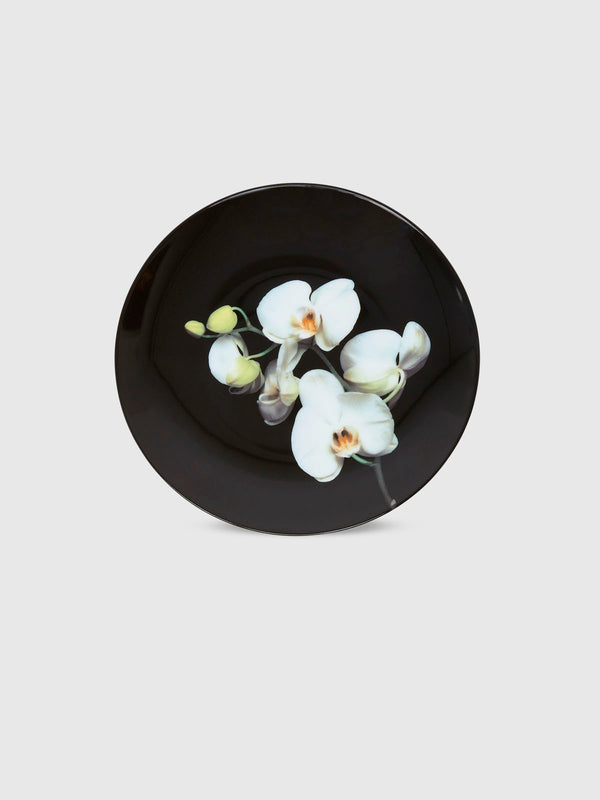 Orchid Plate by Robert Mapplethorpe - 10 Corso Como New York
