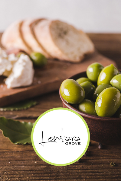 Walk through Lentara Olive Grove + tasting