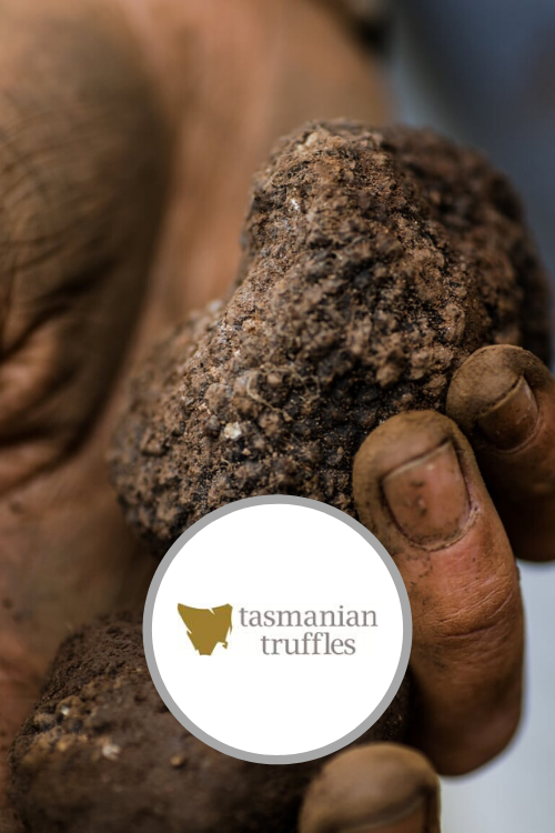 Join the hunt for black truffles & lunch