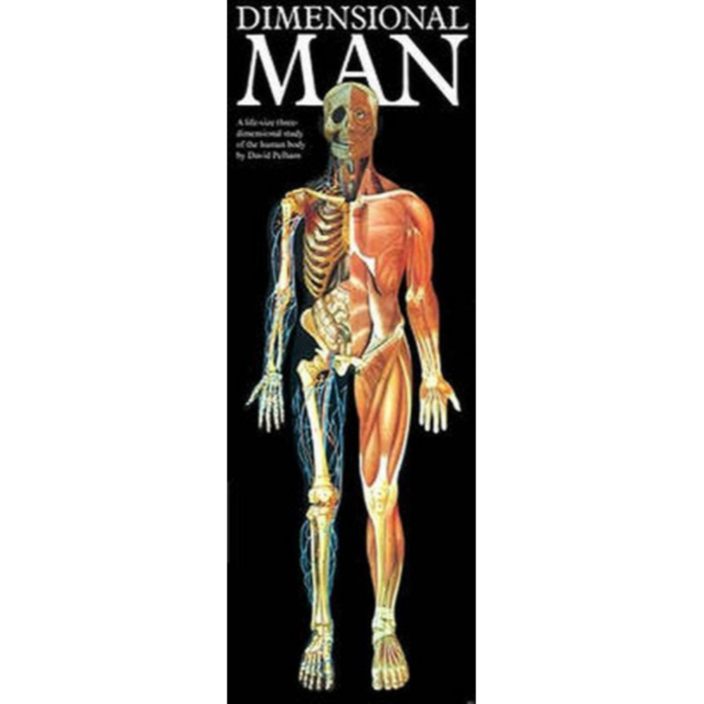 Dimensional Man Anatomical Chart