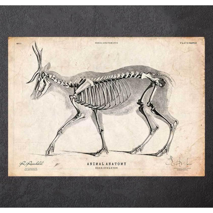 Deer Skeleton Print III