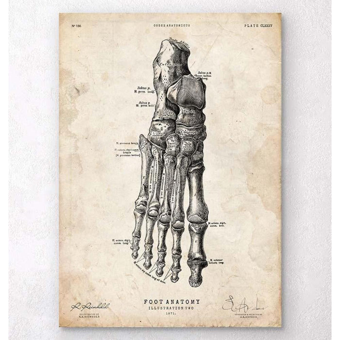 Foot Anatomy Art Print II