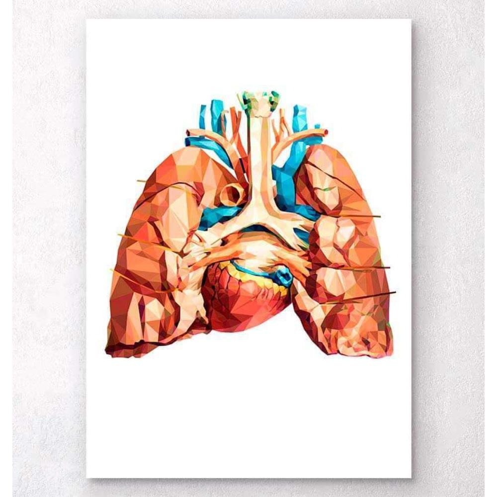 Heart And Lungs Anatomy