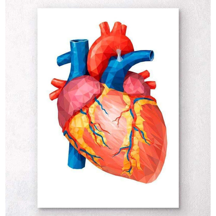 Geometrical Heart Anatomy II