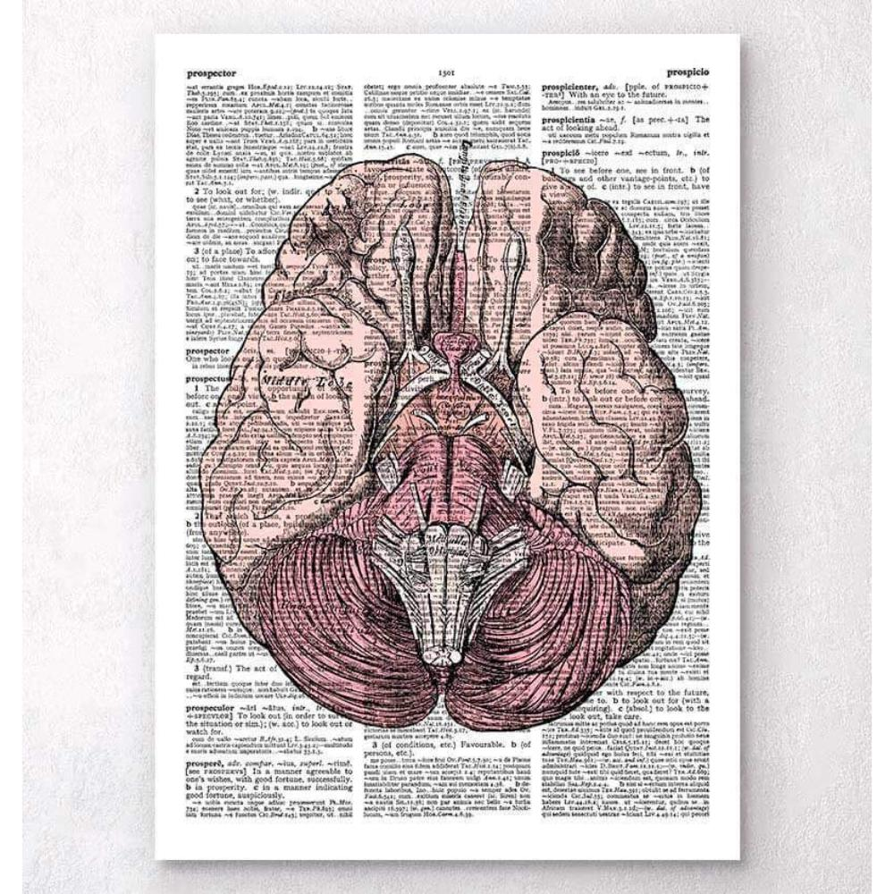 Brain Anatomy Dictionary Page