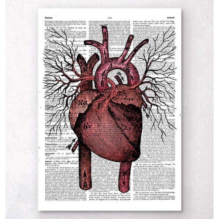 Heart Anatomy Dictionary Page